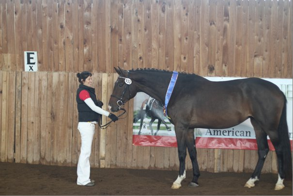 Alea d'Aout Premium and Champion Mare